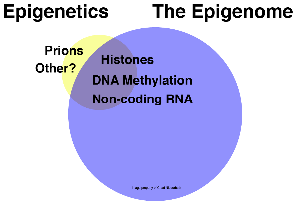 image from What is Epigenetics?